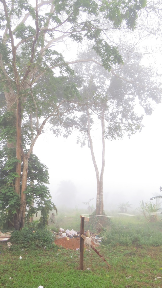misty mornings are every morning here